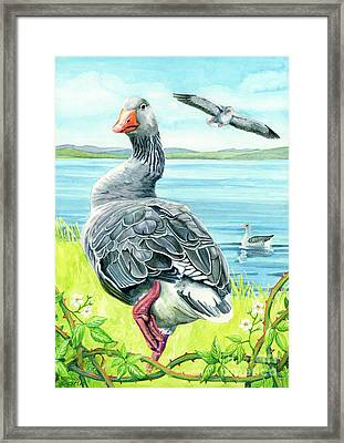 The Goose  Framed Print by Antony Galbraith