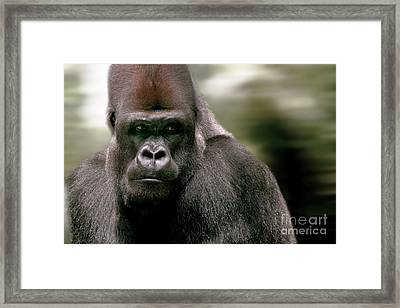 Framed Print featuring the photograph The Gorilla by Christine Sponchia