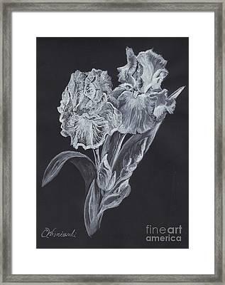 The Gossamer Iris Framed Print by Carol Wisniewski