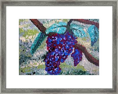 The Grapevine Framed Print by Deborah Rosier