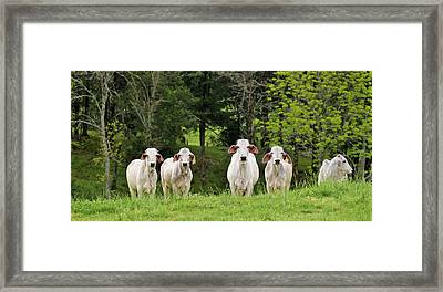 The Grass Is Always Green On The Other Side Of The Fence Framed Print by John Glass