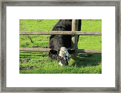 Framed Print featuring the photograph The Grass Is Always Greener by Art Block Collections