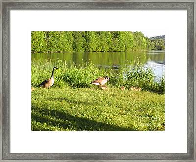 The Grass Is Greener On The Other Side Framed Print by Daniel Henning