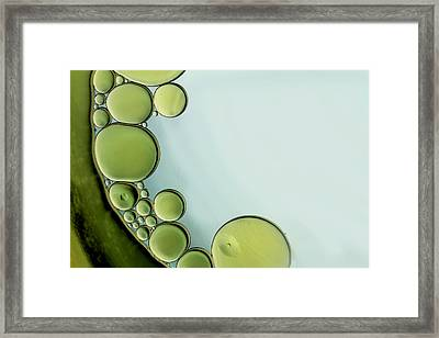 The Grass Is Greener Framed Print by Rebecca Cozart