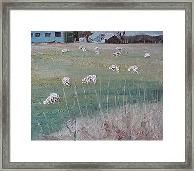 The Grazing Sheep Framed Print by Francois Fournier