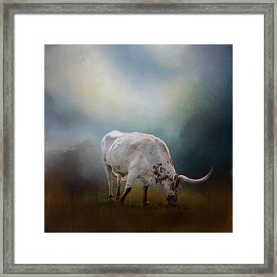 The Grazing Texas Longhorn Framed Print
