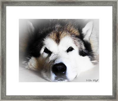 The Great Alaskan Framed Print