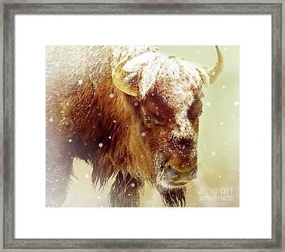 The Great Bison Framed Print