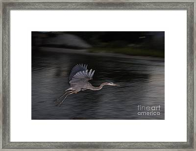 The Great Blu Framed Print by Debbie May