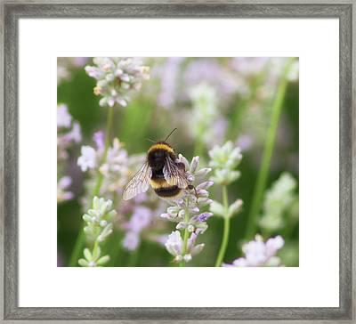 The Great British Bee Framed Print