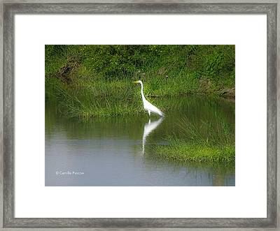 Great Egret By The Waters Edge Framed Print