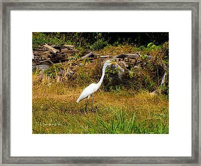 Egret Against Driftwood Framed Print
