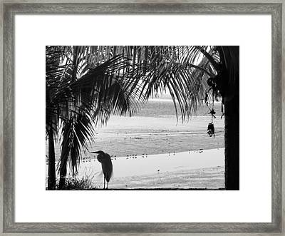 Watching The Tide Framed Print