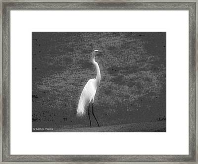 The Great Egret Framed Print