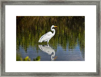 The Great Egret Framed Print by John M Bailey