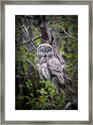 The Great Gray Framed Print
