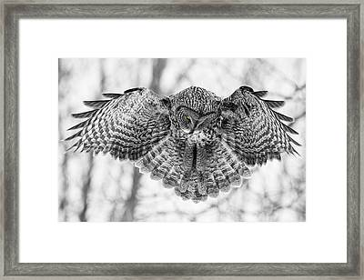 Framed Print featuring the photograph The Great Grey Owl In Black And White by Mircea Costina Photography