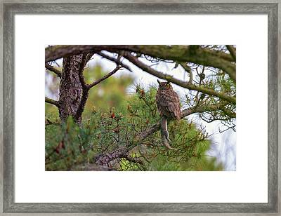 The Great Horned Owl And His Prey Framed Print by Rick Berk