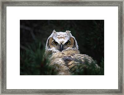 The Great Horned Owl Framed Print by Brian Gustafson