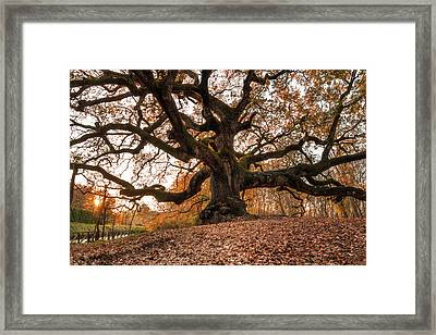 The Great Oak Framed Print