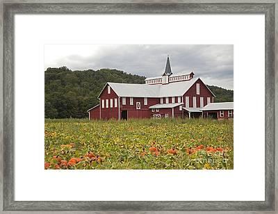 The Great Pumpkin Harvest Framed Print by John Stephens
