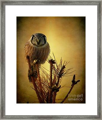 The Great Stare Down Framed Print