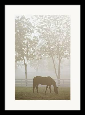 Kentucky Horse Park Framed Prints