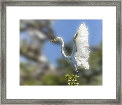 Framed Print featuring the photograph The Great White Egret by Paula Porterfield-Izzo