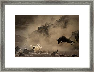 The Great Wildebeest Migration Framed Print