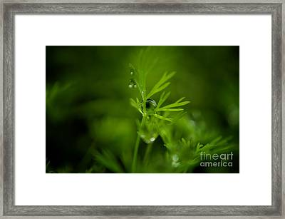 The Green Drop Framed Print