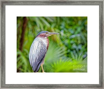 The Green Heron Framed Print
