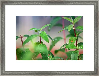 The Green Key Of Life  Framed Print by Nicole Frischlich