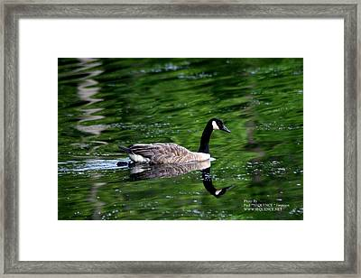 The Green Lake Framed Print