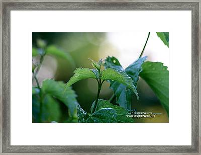 The Green Leaf Framed Print