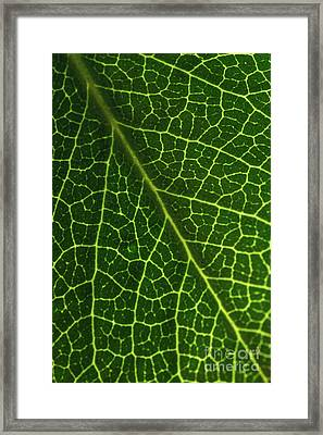 Framed Print featuring the photograph The Green Network by Ana V Ramirez