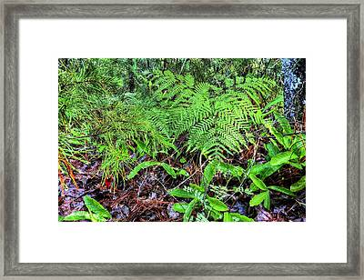 The Green Of The Forest Floor Framed Print by JC Findley