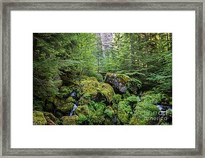 The Green Scene Framed Print by Carrie Cole