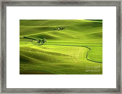 The Greens Of Spring Framed Print