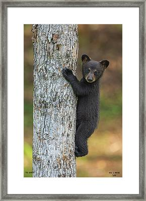 The Gripper Framed Print by Dale J Martin