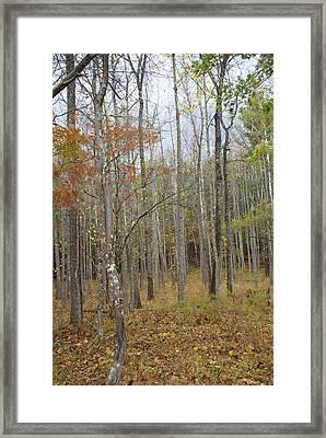The Grove Framed Print by Bj Hodges