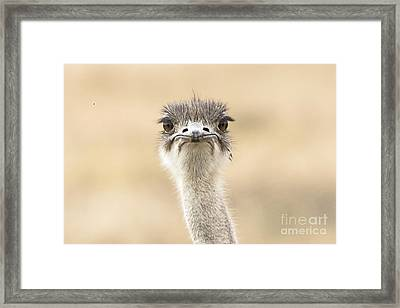 The Grump Framed Print
