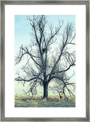 The Guardian Framed Print by James BO Insogna