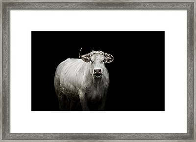 The Guardian Framed Print by Paul Neville