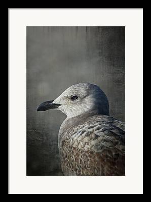 Coastal Birds Mixed Media Framed Prints