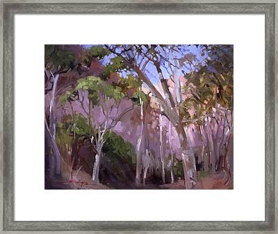 The Gum Grove Catalina Framed Print