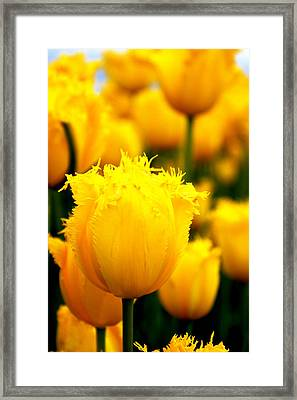 The Hamiltons Framed Print by Sonja Anderson