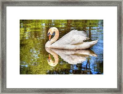 The Hammy Swan Framed Print