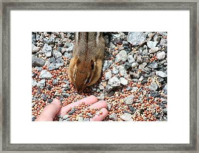 The Hand Out Framed Print by Randy Morehouse