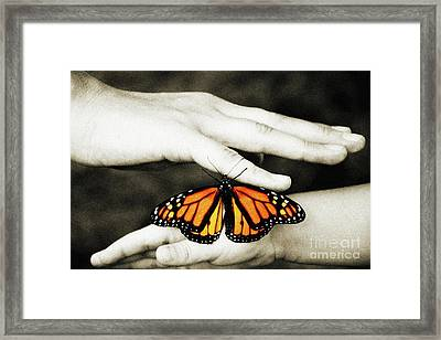 The Hands And The Butterfly Framed Print by Andee Design