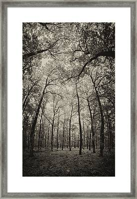 The Hands Of Nature Framed Print